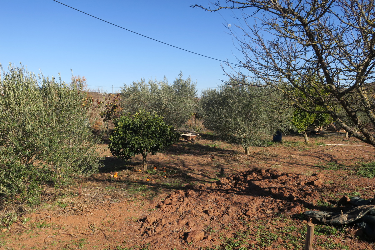 Land - For Sale
